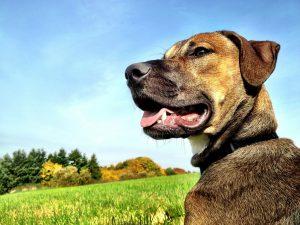 Hüttenurlaub mit Hund in Bayern