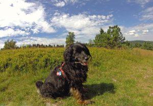 Hüttenurlaub mit Hund in der Schweiz